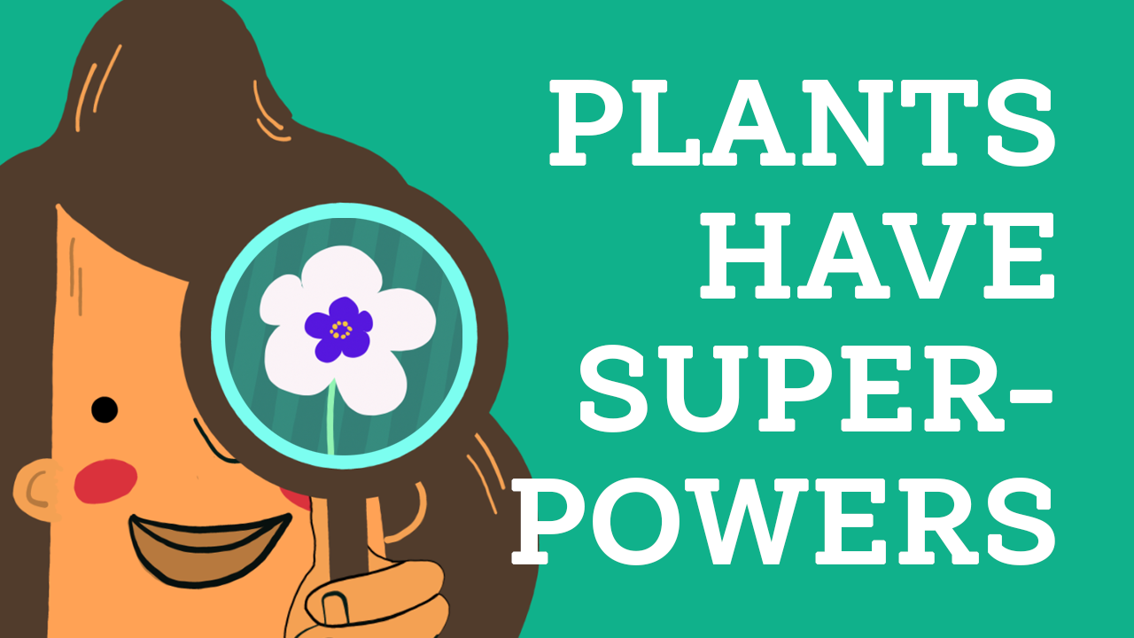 Plants Have Superpowers! PlaMatSu Exhibition Launches 5 September 2020!